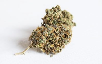 Do Different Strains Cause Different Highs?