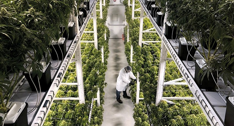 Cannabis Cultivation Compliance Knowledge