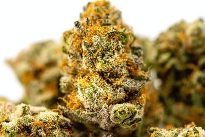 Choose the Right Cannabis Dispensary that offers high-quality cannabis products