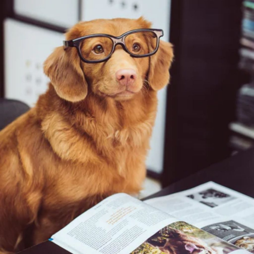 cannabis product labels a dog can read