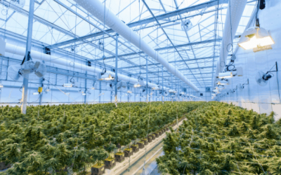 DEA Pushing to Approve More Research Cannabis Cultivators